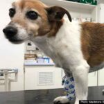 Pet owner fined over dog attack which led to severe injury to another dog near Maidstone